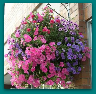 spring_hanging_baskets (3)